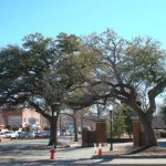 FAQs about the Toomer's Oaks Poisoning